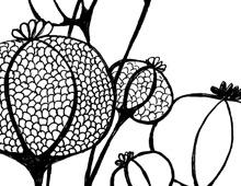 Dessins floraux